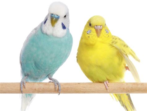 pet birds weneedfun