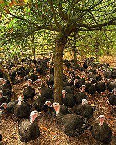 bbc rhs hyde hall  turkeys   woodland management