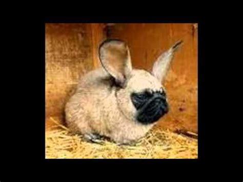 imagenes de animales artrópodos animales combinados youtube