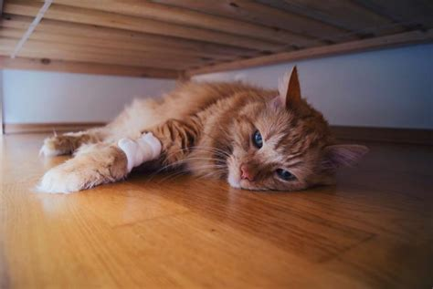 signs your is dying of age symptoms of a dying cat