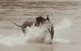 water sports gifs find share  giphy