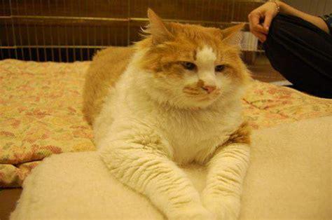 Makanan Kucing Royalcanin Exigent makanan kucing agar kucing gemuk dan sehat binatang