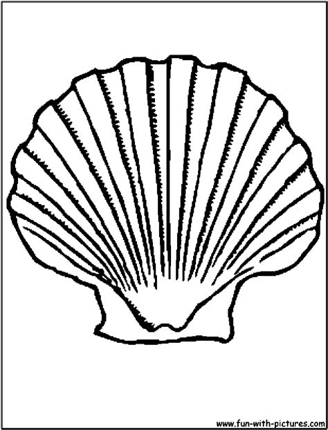 free coloring pages of sea shells