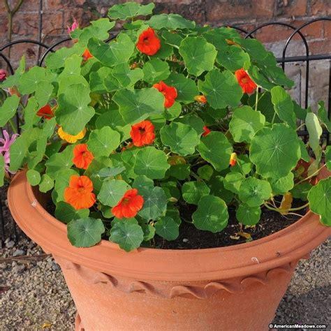 piante da giardino pieno sole piante fiorite perenni pieno sole per una spettacolare