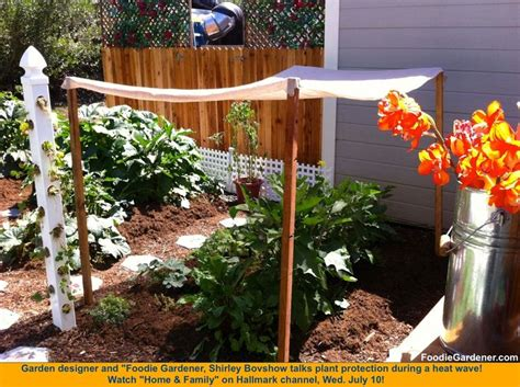 Vegetable Garden Shade Structures 58 Best Images About Our Veggie Garden On
