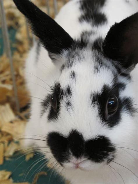 black  white bunny  favorite color  pet