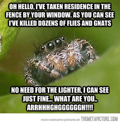 Cute Spider Memes - spider humor quotes quotesgram