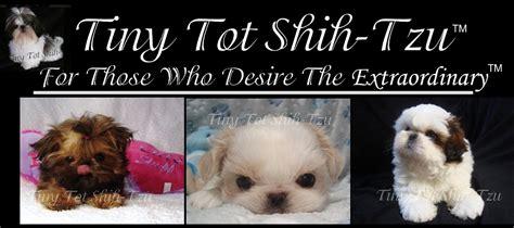 s tiny shih tzu s tiny shih tzu assistedlivingcares
