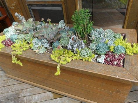 Best Planters For Succulents by Succulent Succulent Planters Cultivate Garden Gift