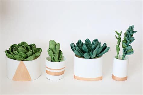 Kaktus Sukulen Hiasan Rumah Souvenir Unik cara merawat sukulen di dalam rumah dengan benar plus