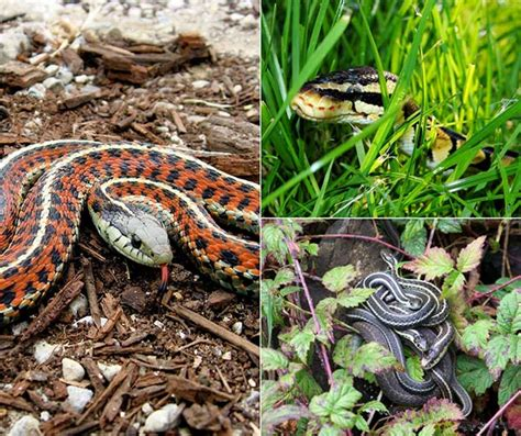 Types Of Garden Snakes by 7 Ways To Keep Snakes Out Of Your Home And Garden Home