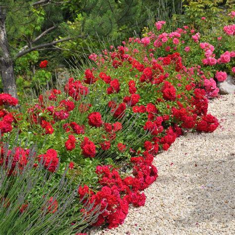 Plantes Et Jardins by D 233 Corosier 174 Kadora 174 Plantes Et Jardins