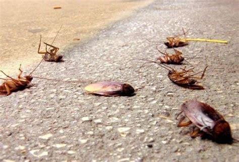 come uccidere le formiche volanti come eliminare le blatte rosse guide