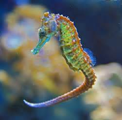 what color is a seahorse homeless poorgirlintexas