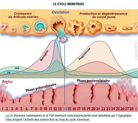 alimenti progesterone taux de cholesterol carabiens le forum
