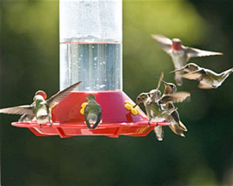 where to hang hummingbird feeders southern states