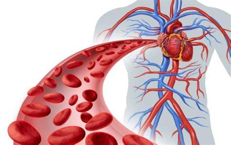 vasi sanguinei differenza tra vene e arterie