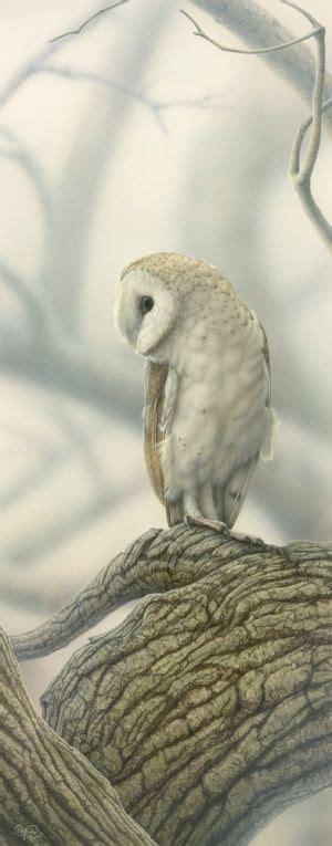 Owls & Birds of Prey