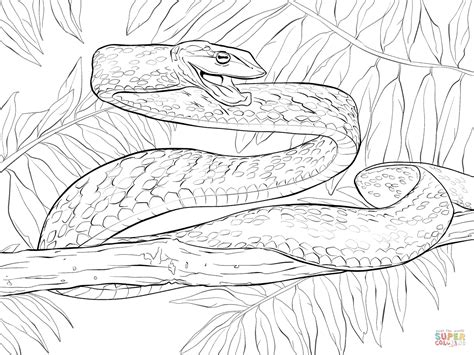 The Gallery For Gt Green Anaconda Coloring Pages Anaconda Coloring Page