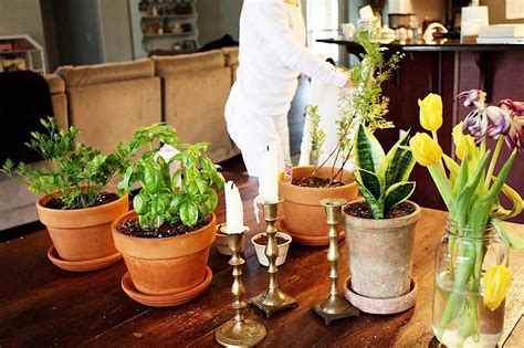 planter terracotta smith hawken target