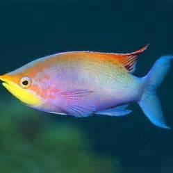 Rare Fish available from our aquarium store  Amazing Amazon