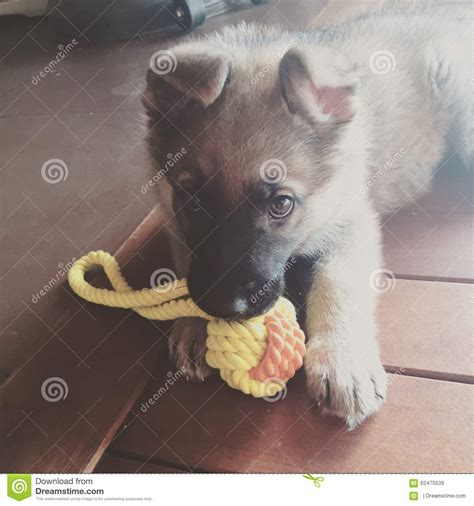 puppy playtime puppy playtime stock photo image 62475539