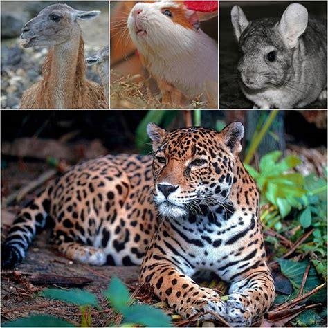 imagenes animales de la sierra dibujos para colorear animales de la sierra ideas
