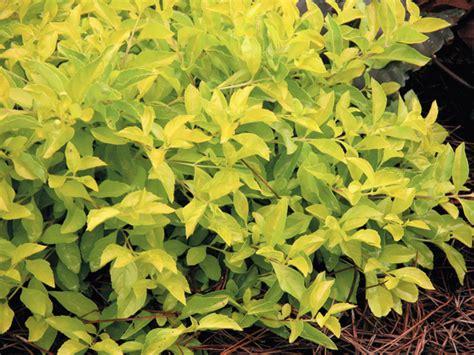sun foliage plants plant perennials in your south florida garden garden club