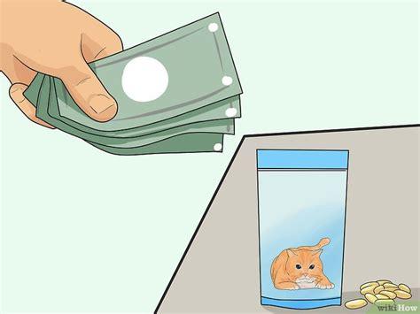 Keep Cat From Shedding by Verhindern Dass Katzen Haaren Wikihow