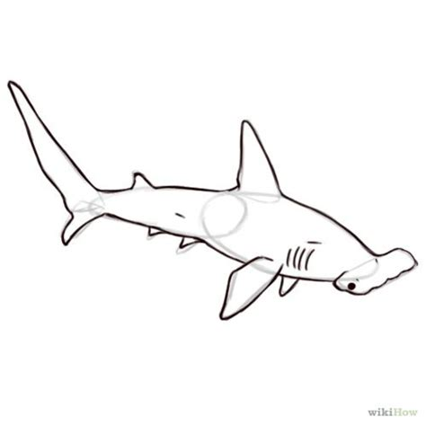 shark outline tattoo hammerhead shark outlines tattoos