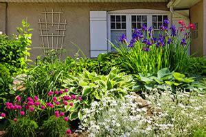 welche blumen blühen den ganzen sommer im garten beliebte blumen f 252 r den garten im sommer und winter
