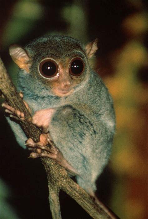 imagenes tiernas reales fotos de animales raros del mundo