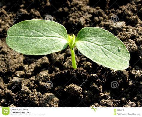 small plant small plant cucumber stock image image of dark design