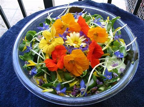 flower food tender petals for food decoration and gourmet recipes