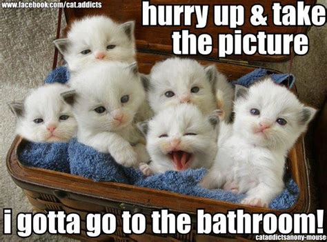where do newborn kittens go to the bathroom cute and funny pictures and more basket of white fluffy