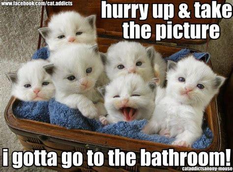 where do newborn kittens go to the bathroom ten cats comic strip october 02 2014 on gocomics com