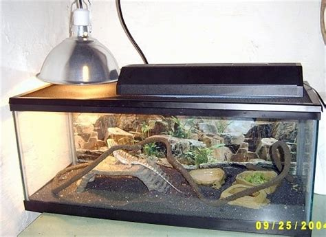 bearded dragon cage lighting keeping bearded dragons as pets