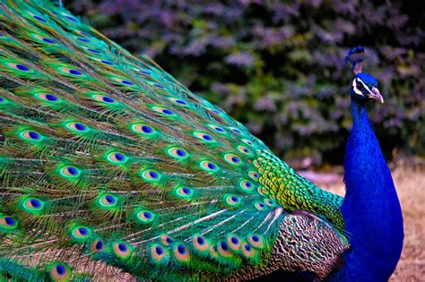 most beautiful colors amazing world fun the most colorful birds on the earth