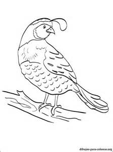 free quail and manna coloring pages