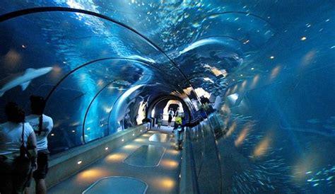 baby shark di neo soho en images les dix plus beaux aquariums de la plan 232 te l