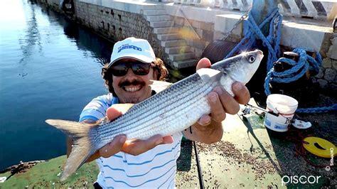 pesca al cefalo nei porti tecniche di pesca al cefalo piscor