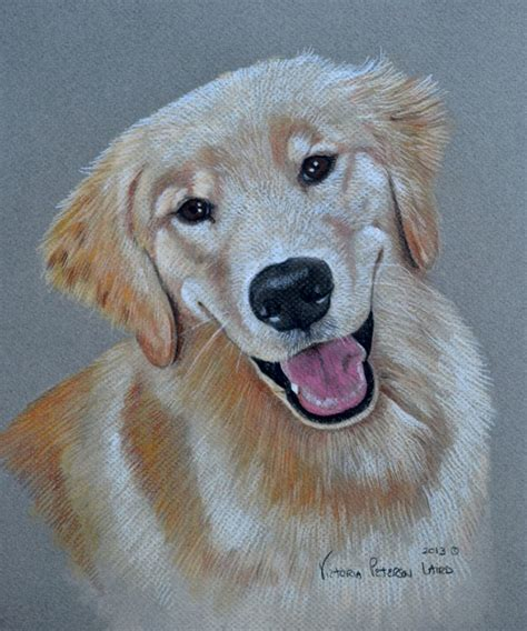 mariner golden retrievers portraits pet portraits by peterson laird cat and