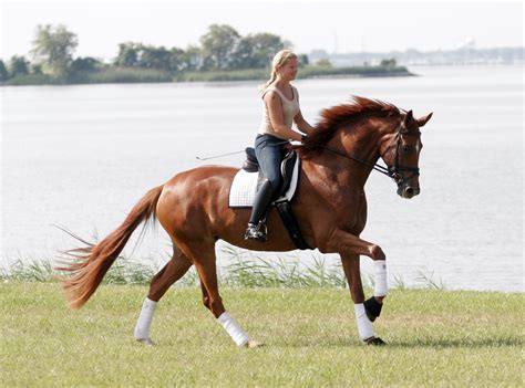 commercial girl riding horse 12 things they don t tell you about horses