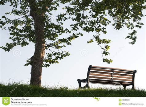 bench under tree bench under rhe tree stock image image of plant lawn