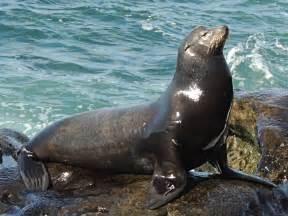 sea lion information for kids