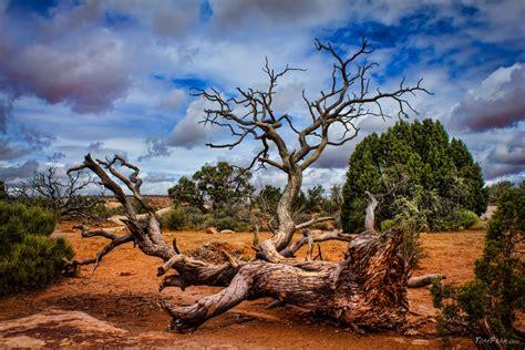 tree in a fallen tree in the desert tomfear tomfear