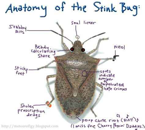 Hates The Droopy Part And The Brown Part by The Anatomy Of The Stink Bug Stinkbugs Pestcontrol