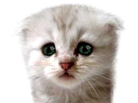 imagenes de gatitos llorando gatito llorando youtube