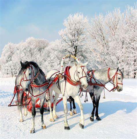 images  equestrian christmas  pinterest horses merry christmas  christmas