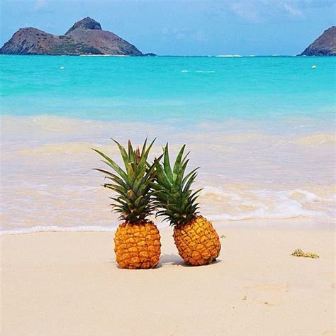 Pineapple Set Rok Best Friends pineapples the polished pineapple wallpaper summer and wallpaper